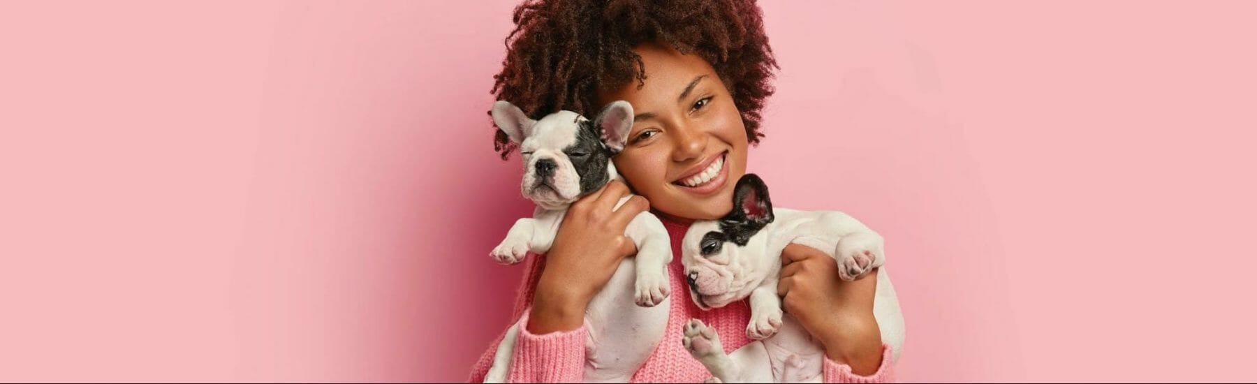 Lady holding two pugs with pink background
