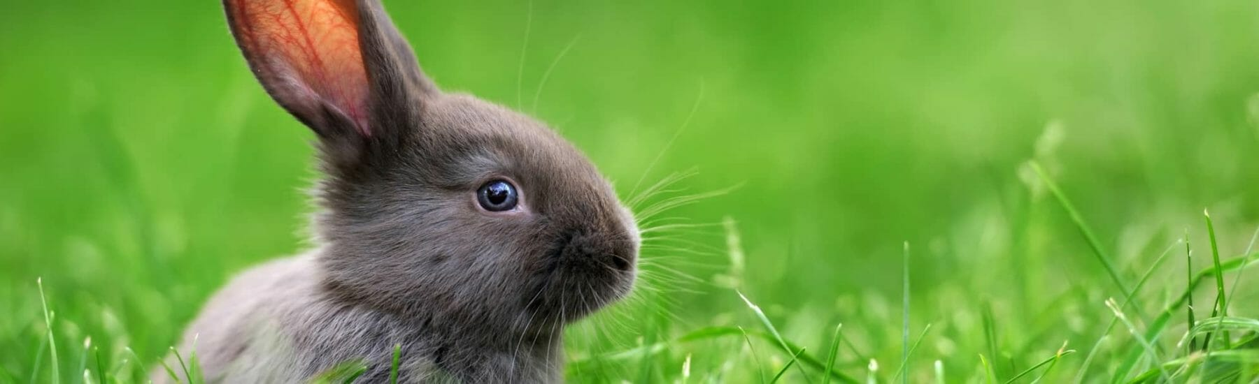 Baby bunny sitting in the green grass